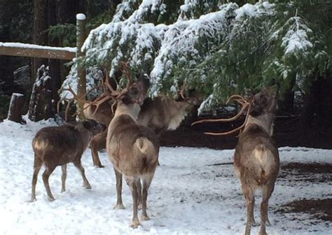 This Reindeer Farm In Oregon Will Positively Enchant You